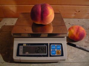 mega peach